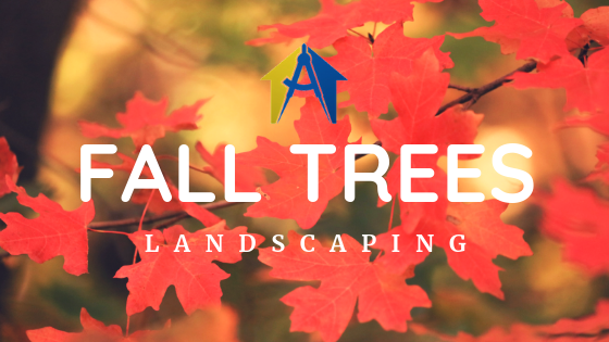 Best Fall Trees for GA Landscaping